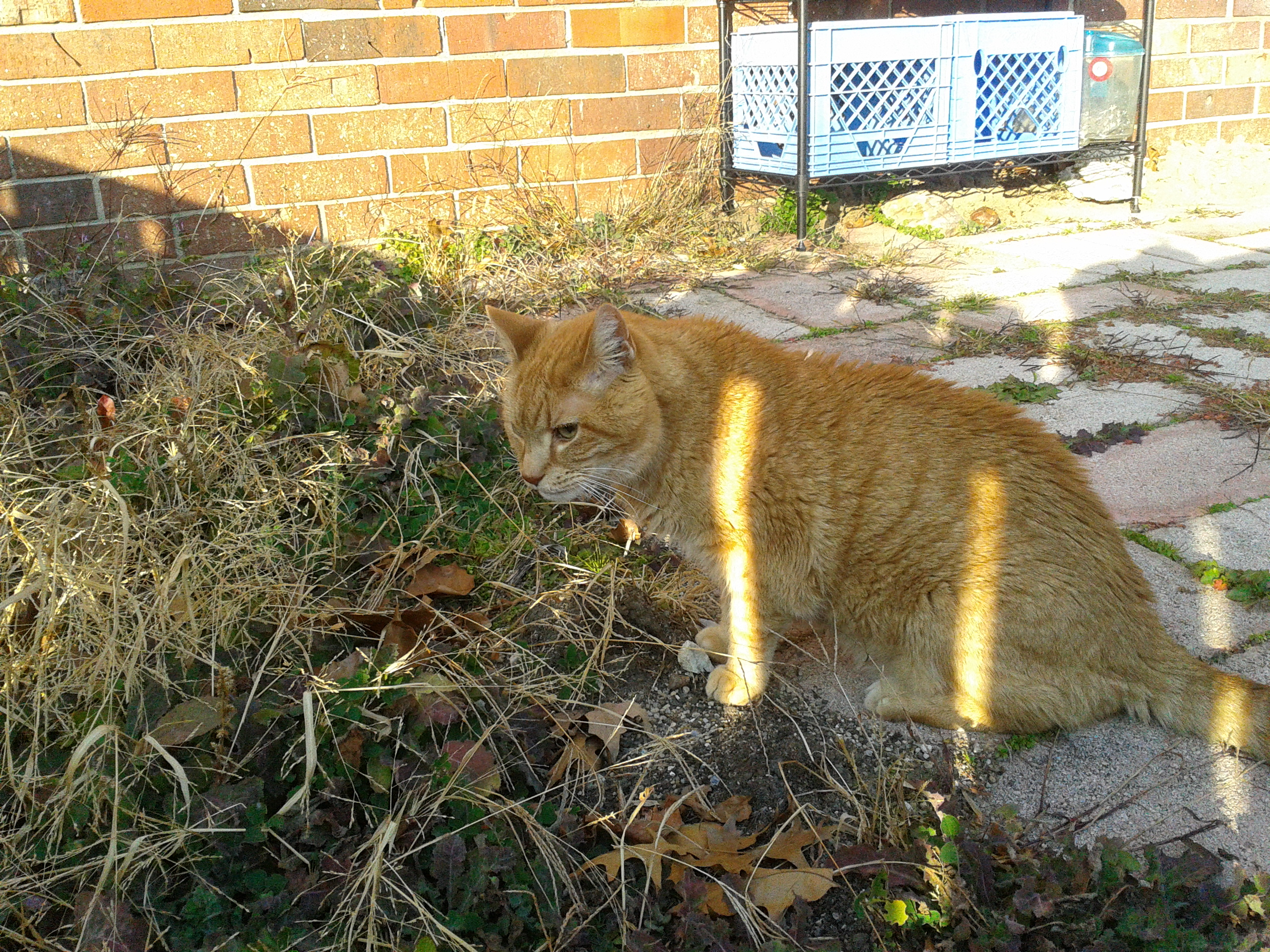 Garfield's Garden Paradise