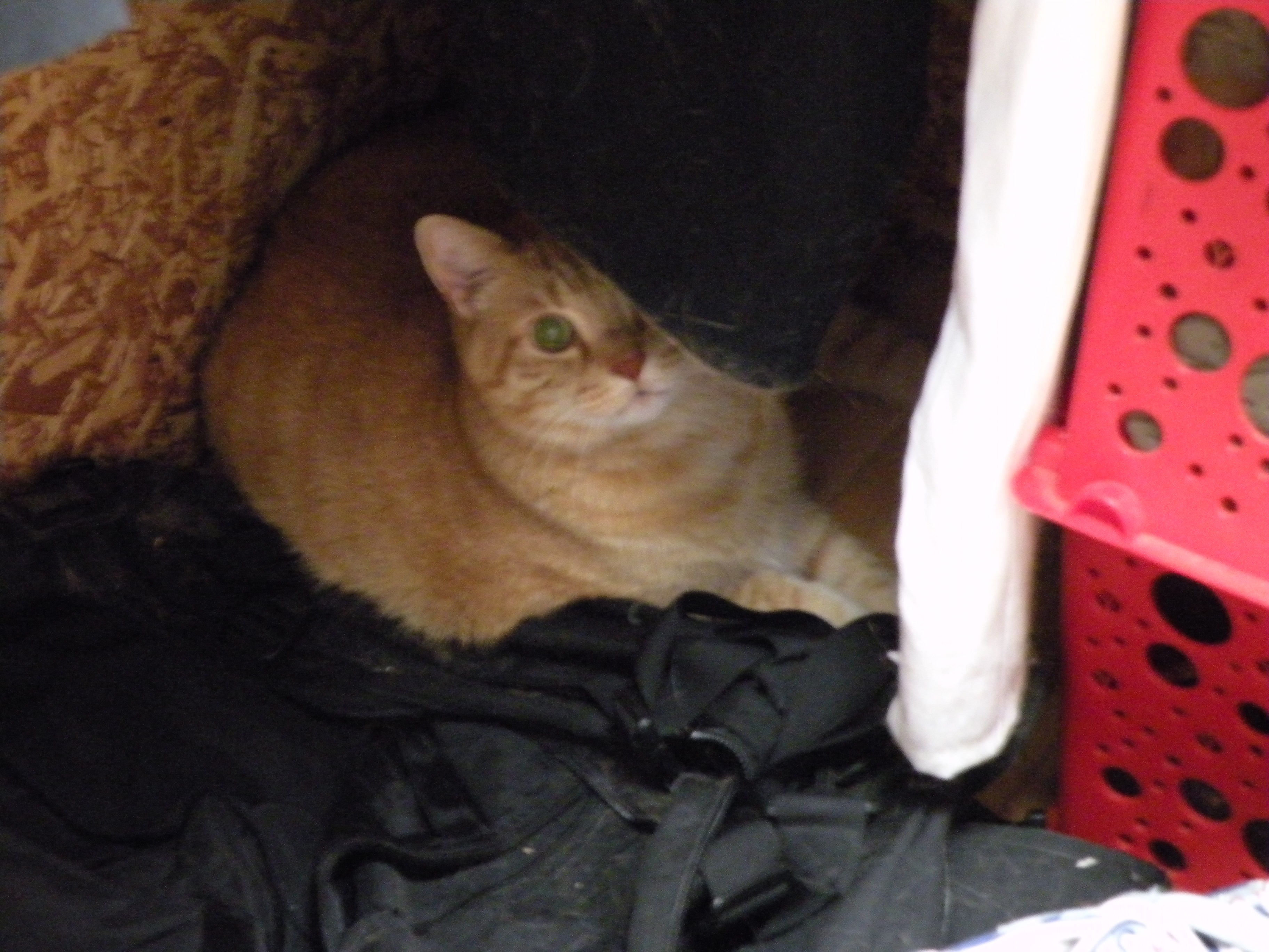 Garfield lounging in the closet to keep Ozzy company.